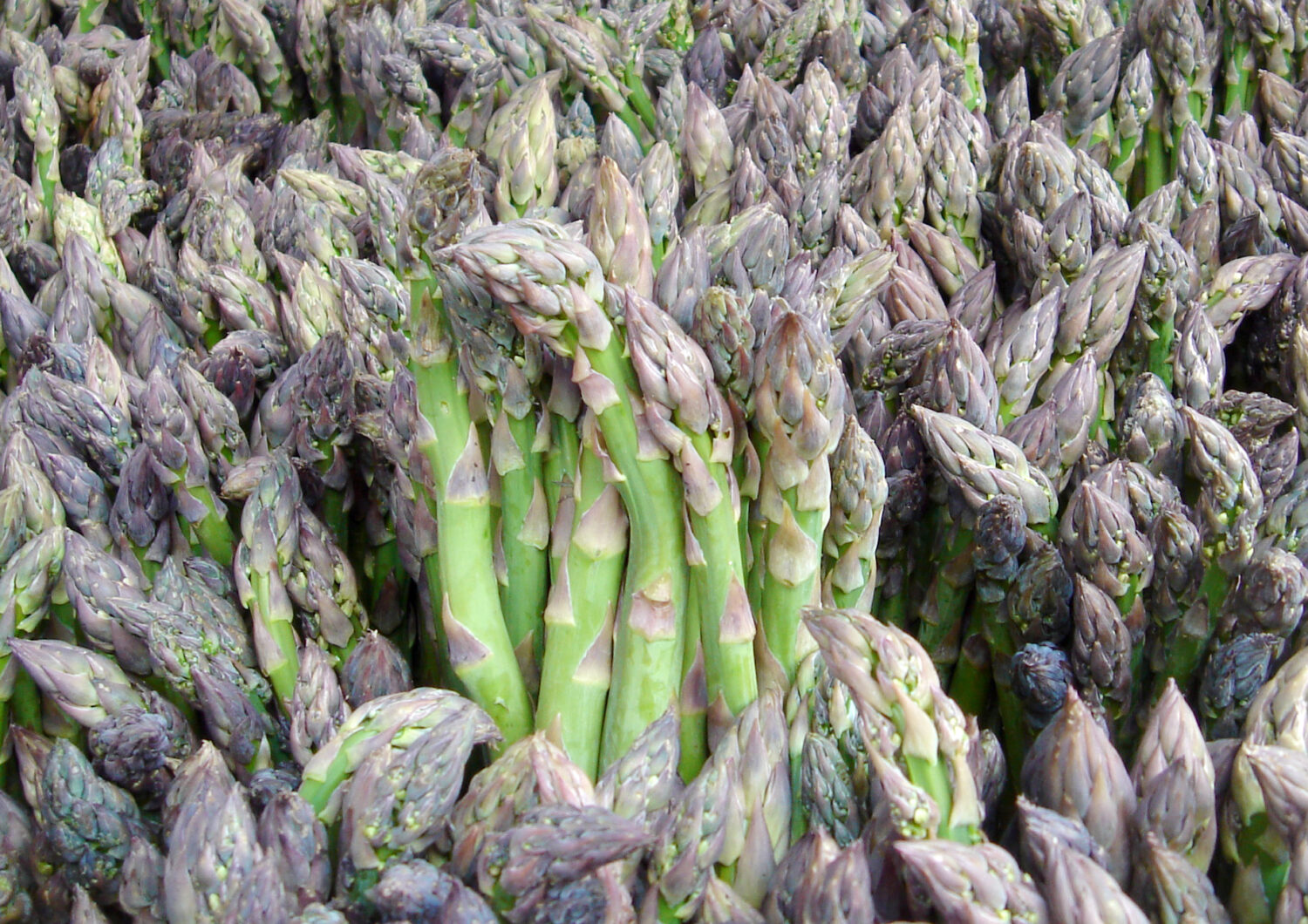 Asparagus - Essential Phytochemical