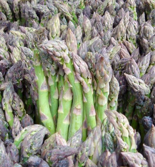 Asparagus - Essential Phytochemical