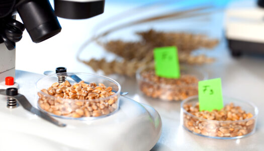 Eight Must-Knows For Avoiding GMO
