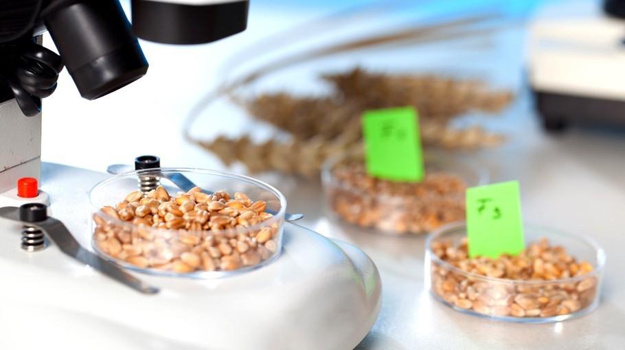 food chemistry food in news