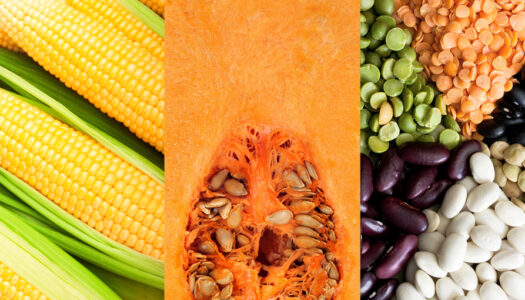 Start a New Thanksgiving Tradition with the Three Sisters: Corn, Beans, and Squash