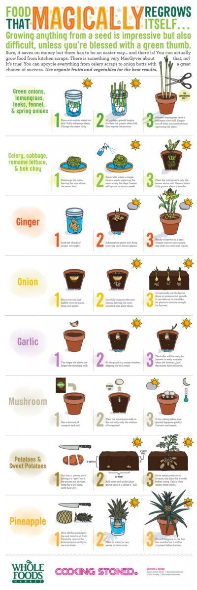 Awesome Foods That Regrow Themselves From Scraps - Naked Food Magazine