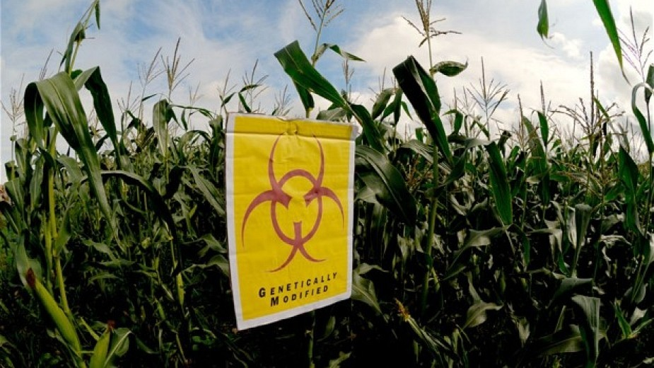 White House Orders Review of GMO Regulations