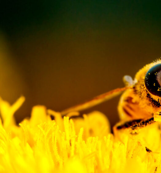 What a World Without Bees Looks Like