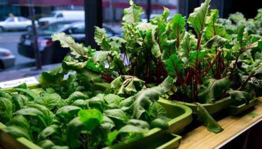 8 Veggies To Grow Indoors This Winter