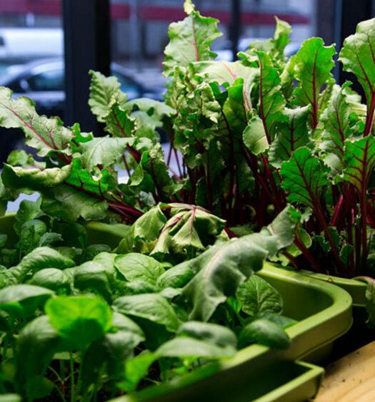 8 Veggies To Grow Indoors This Winter