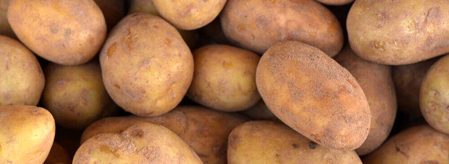 GMO Potato Now Classified as High-Risk | Naked Food Magazine