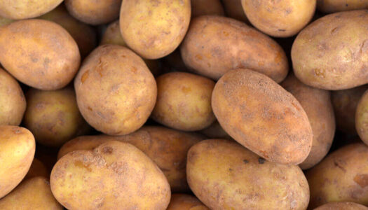 GMO Potato Moved To High-Risk List